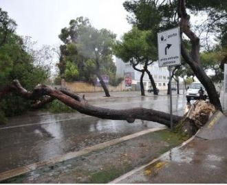 albero bari 1